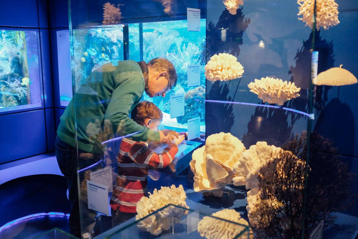 hannover-landesmuseum-aquarien